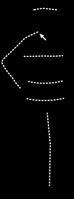 Man Measurement Visual