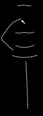 woman measurement visual